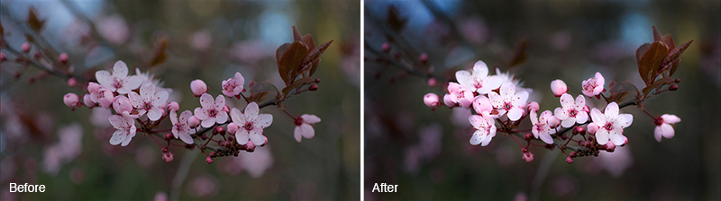 How to Use Burn and Dodge Tool in Photoshop - Before and After Image
