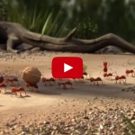 This Advertisement Explains Why Ants Work and Travel in Groups!