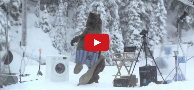 Bear Doing The Most Unbelievable Act!