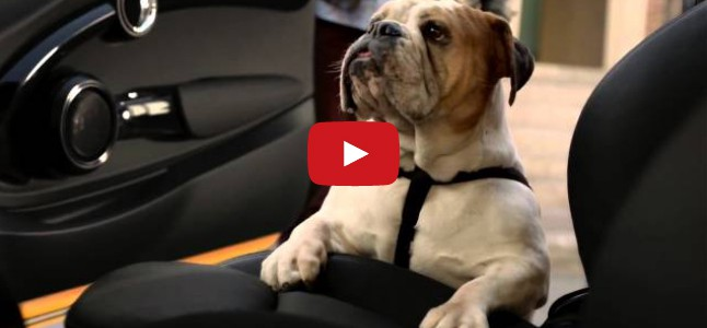 How Much Is The Doggy In The Car?